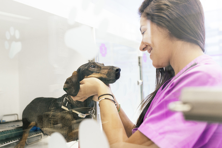 Veterinarian doctor hugging a beautiful dog. Veterinary Concept. Stock Photo