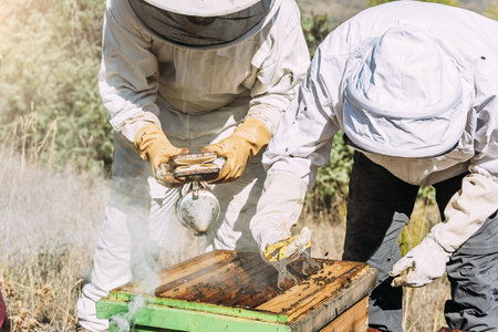 Beekeepers working collect honey. Beekeeping concept.