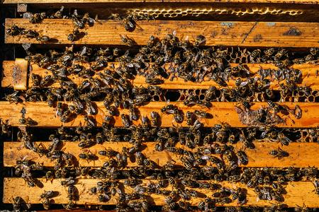 Close-up van bijen op honingraat. Bijenteelt concept. Stockfoto