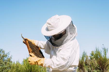 L'apicoltore che lavora raccoglie il miele. Concetto di apicoltura Archivio Fotografico - 91578900