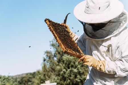 양봉가가 꿀을 수집 작업. 양봉 개념입니다. 스톡 콘텐츠