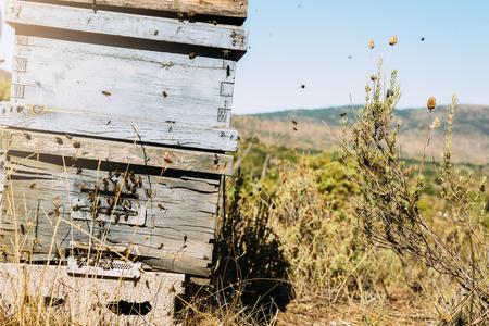 Bees on honeycomb in the nature. Beekeeping concept. Banco de Imagens - 91557946