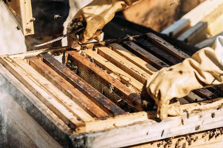 働く養蜂家は蜂蜜を集める。養蜂の概念。