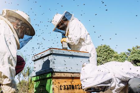 Beekeepers working collect honey. Beekeeping concept.