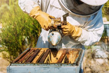 Imkerwerk verzamelt honing. Bijenteelt concept.
