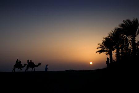 Camel Train at dusk with sun setting Stock Photo - 2896898
