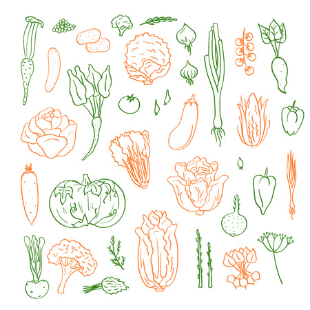 Vector hand drawn doodle vegetables icons set illustration Çizim