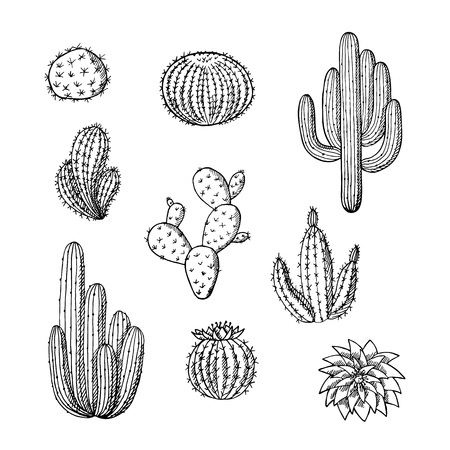Vector hand drawn wild cacti plants set. Succulent cactus desert plants isolated on white backgrund