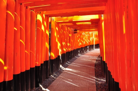 Path of torii is leading to the endless destination