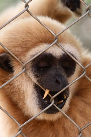 The monkey in a cell Stock Photo - 4015571