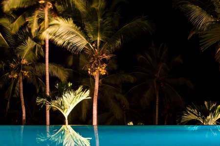 coconut trees and swimming pool photo