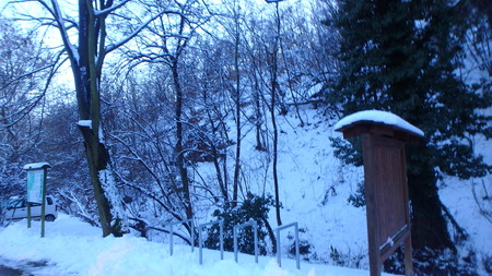 Alder valley in winter