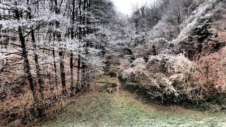 Alder valley forest Stock Photo