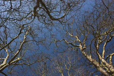 Bare trees of a forest against clear sky making haunting appearance  photo