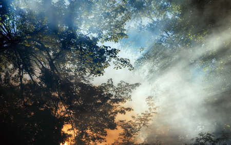 devastation: Smoke from a forest fire rises through the trees. Sunlight filters through the haze.