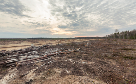 felling: Felling forests near the sand pit. Human impact on the environment.