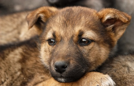 Homeless, sad puppy muzzle close up. Soft focus Stock Photo