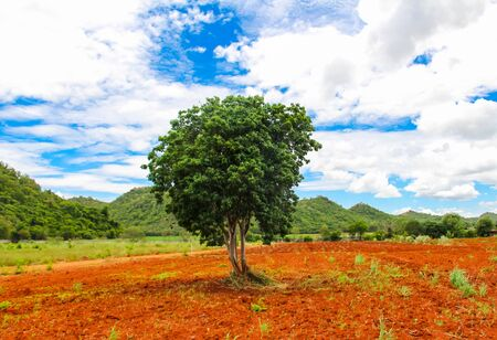 red soil: Tree with red soil.