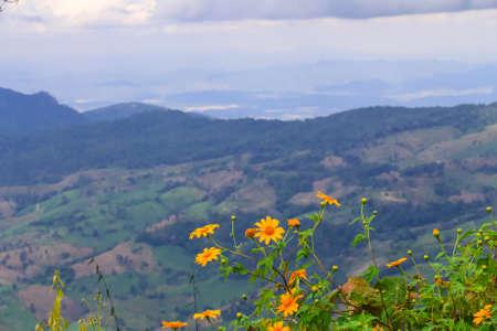 hojas de arbol: Paisaje del parque nacional de Phu Ruea en Tailandia.