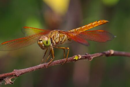 the dragonfly: Dragonfly in the garden. Stock Photo