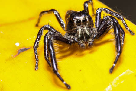 jumping spider: Jumping spider in the garden.