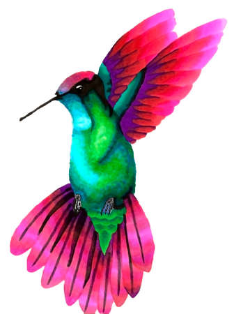 Beautiful bright hummingbird bird in motion while flying. Technique alcohol markers.
