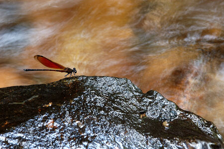 dragonfly wings: Dragonfly wings on the Stone  Stock Photo