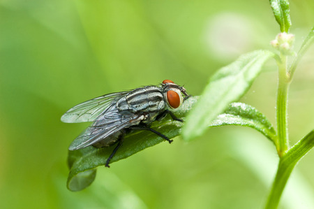 fly in nature. macro photo