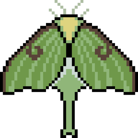 Vector pixel art moth isolated Illustration