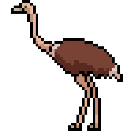 vector pixel art ostrich isolated cartoon