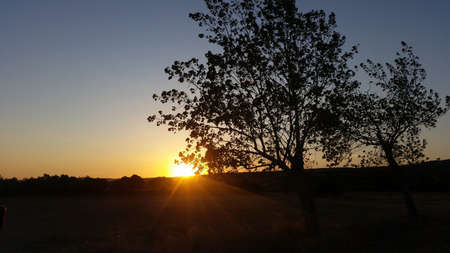 A beautiful sunset and an olive tree 写真素材