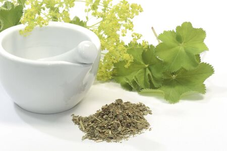 Herbal tea with ladys mantle and mortar on white background photo