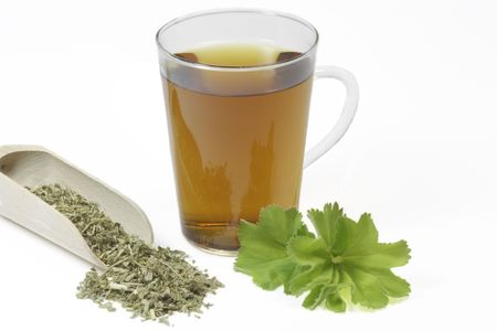 ladys mantle: Herbal tea with ladys mantle - isolated on white background