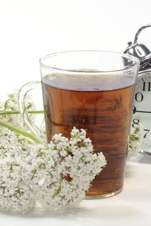 Herbal tea in a glass with valerian blossoms and alarm clock over white background Stock Photo