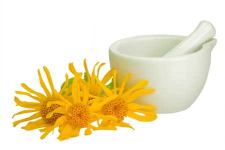 Leopard's bane blossoms with mortar - isolated on white Standard-Bild