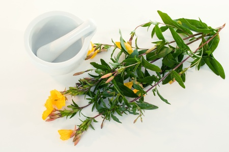 primrose oil: Evening primerose with mortar and pestle over white background