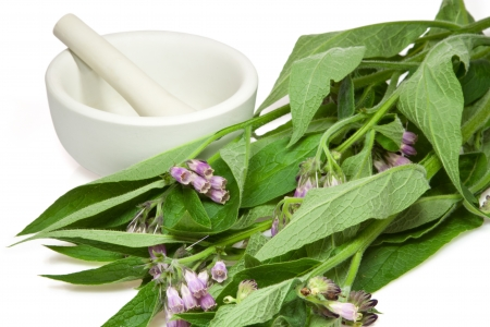 Comfrey with mortar and pestle over white background Stock Photo