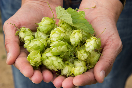 Woman holding hop in her hands photo