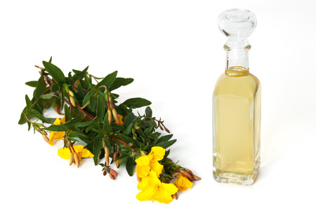 primrose oil: Bottle of oil with fresh evening primrose - isolated