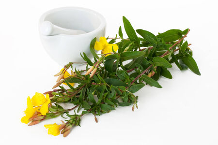 primrose oil: Evening primroses with mortar and pestle over white background
