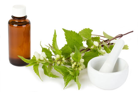 stinging  nettle: Stinging nettle with medicine bottle isolated on white background Stock Photo