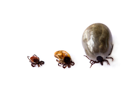 Three different ticks on white background