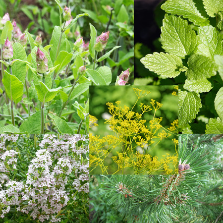 remedial: Collage of different remedial herbs Stock Photo