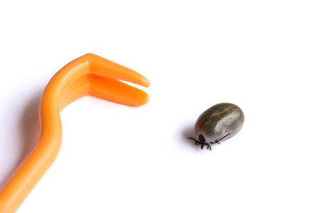 Tick and pliers on white background Standard-Bild