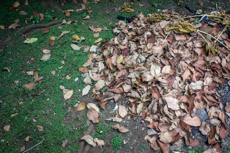 many fallen leaves in the garden that has been collected in close-up Stock Photo