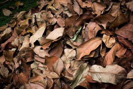 landfills: dry leaf litter collected ready to be dumped into landfills Stock Photo