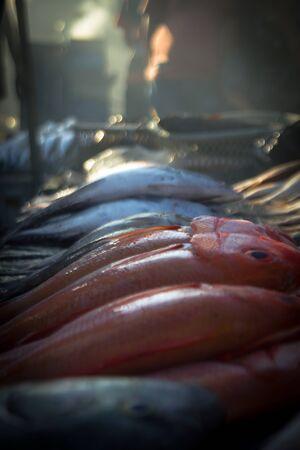 by catch: capturas de pescado fresco de los pescadores