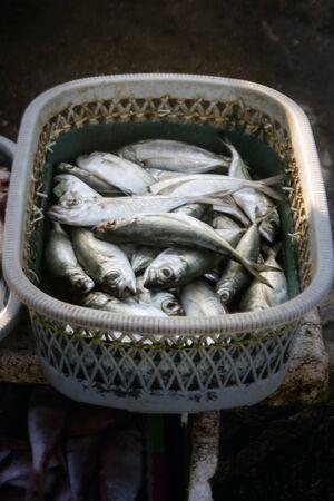 fresh fish catch of fishermen
