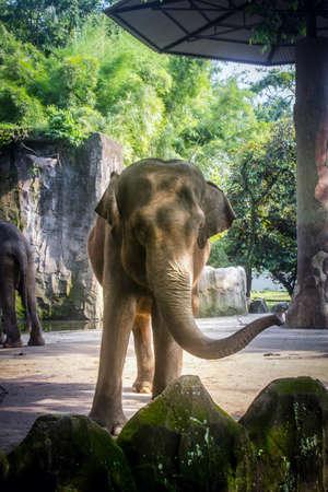 an elephant in a zoo