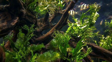 This is picture about decorative aquarium plants.